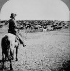 Herding Witnesses